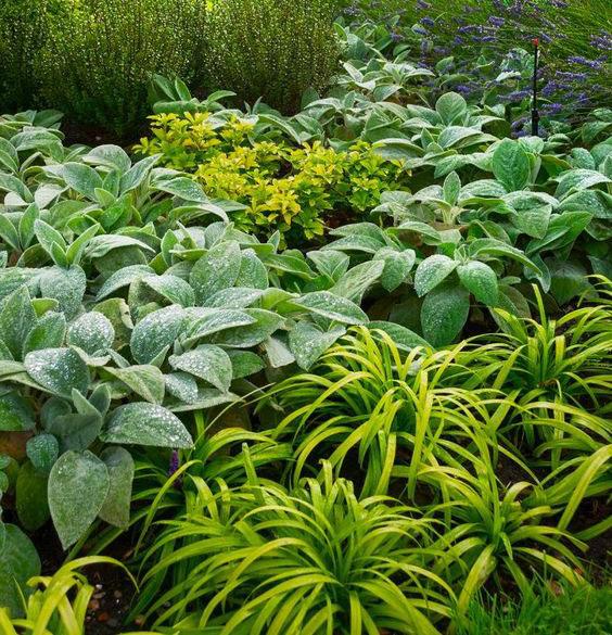Landscape-Garden-Planting-At-A-Coastal-Garden